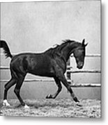 The Beauty Of The Horse Metal Print