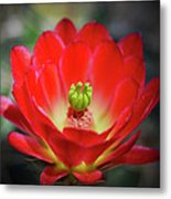 The Beauty Within Metal Print