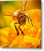 The Bee Gets Its Pollen Metal Print