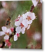 The Bee In The Cherry Tree Metal Print