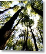 The Bewitched Forest Metal Print by Arie Arik Chen