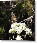 The Big Monarch Metal Print