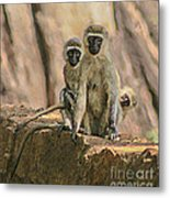 The Black-faced Vervet Monkey Metal Print