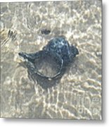 The Black Seashell Metal Print