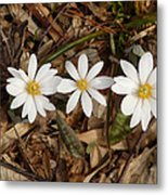 The Bloodroot Trio Metal Print