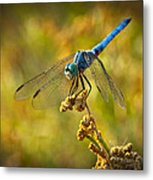 The Blue Dragonfly  Metal Print
