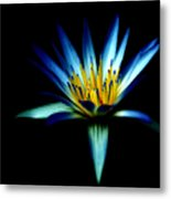The Blue Lotus Of Egypt Metal Print