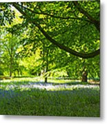 The Bluebell Wood Metal Print