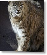 The Bobcat Metal Print