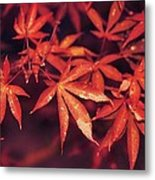 The Bold Reds Of Fall Metal Print