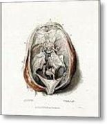 The Brain Circa 1802 Metal Print
