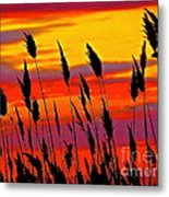 The Breeze Metal Print by Q's House of Art ArtandFinePhotography