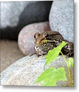 The Bronze Frog Metal Print