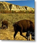 The Buffalo Dance Metal Print