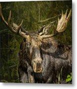 The Bull Moose Metal Print