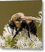 The Bumble Bee.. Metal Print