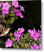 The Butterfly Garden At Night Metal Print