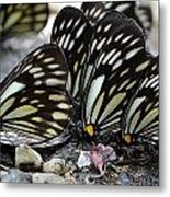 The Butterfly Gathering Metal Print