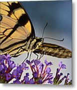 The Butterfly Metal Print by Lori Tambakis