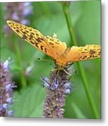 The Butterfly Wins Metal Print