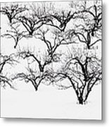 The Calligraphy Of Apple Trees In Winter Metal Print