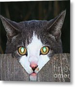 The Cat's Meow Metal Print by Wendy McKennon