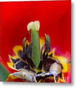 The Center Of Attention Metal Print