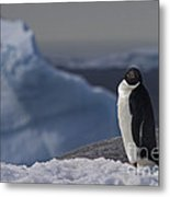The Coldest Place On Earth... Metal Print