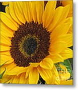 The Color Of Summer - Sunflower Metal Print