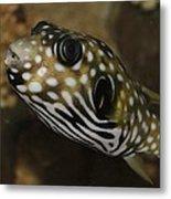 The Colorful Fish Metal Print