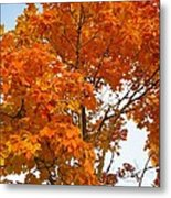 The Colors Brought To Autumn Metal Print by Guy Ricketts