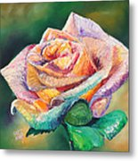 The Colors Of A Rose Metal Print
