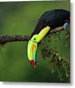 The Colors Of Costa Rica Metal Print