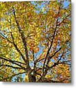 The Colors Of Fall Metal Print