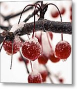The Colors Of Winter Metal Print