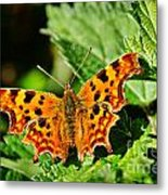 The Comma -- Polygonia C-album Metal Print