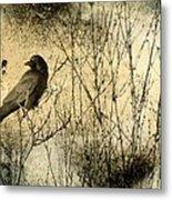 The Common Crow Metal Print