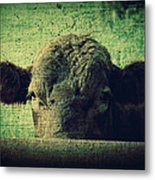 The Cow Metal Print