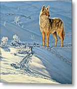the Coyote - God's Dog Metal Print by Paul Krapf
