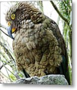 The Crafty Kea Metal Print