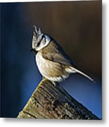 The Crested Tit In The Sun Metal Print