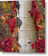 The Crimson Trace Metal Print