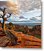 The Crooked Old Tree Metal Print