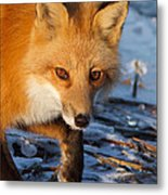 The Curious One Metal Print