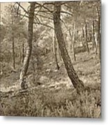 The Dance Of The Forest Metal Print