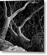 The Dark And The Tree 2 Metal Print by Fabio Giannini