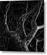 The Dark And The Tree Metal Print
