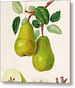 The D'auch Pear Metal Print by William Hooker