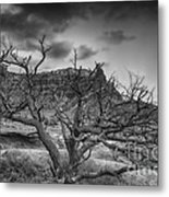 The Dead Pinion Tree Hdr Bw Metal Print
