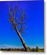 The Death Of  A Tree V5 Metal Print